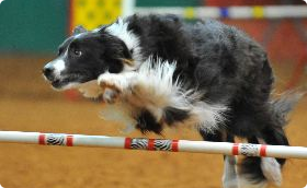 Obedience Training Agility Trial @ J S Bridwell Ag Center | Wichita Falls | Texas | United States